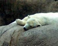 Sleeper Bear