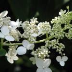 """""""Floral"""" by iiiyaaa"""