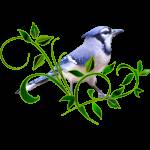 """Beautiful Blue Jay"" by LaurieArnold"