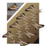 """Amazonian Butterfly--Ecuador 2"" by eye4nature"