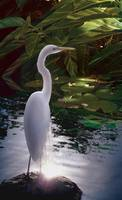 Egret Light