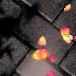 """Rose Petal Path"" by eye4nature"