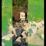 """_:3Three:Pine_on_the_Rocks:_"" by vivian-mairo"