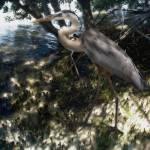 """""""Mangrove Heron"""" by SteveHunziker"""