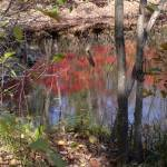"""autumn reflections"" by maskit5256"