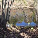 """autumn reflection"" by maskit5256"