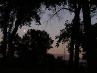 sunset moonlight and trees