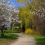 """""""spring lane"""" by fjsjr"""