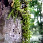 """""""Australian Moss"""" by bnitz"""