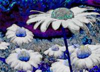 Blue Surreal Daisies