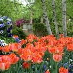 """Tulips"" by bnitz"