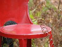 red chair - fern
