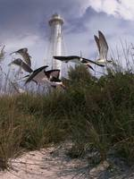 Lighthouse Terns-V