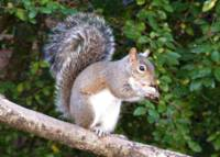 Squirrel on Limb