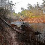 """Bank of the Suwannee River"" by ChrisCrowley"