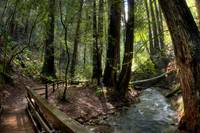 Muir Woods Bridged Trail