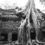 """At Ta Prohm"" by fluckduffy"