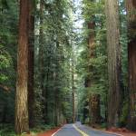 """Avenue of the Giants - World"