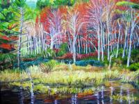 New England Woodland Reflections