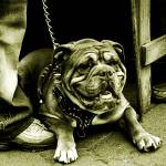 """The Camden Town Guard Dog"" by MrTriggerFinger"