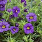 """""""Purple Flowers"""" by TallyAnn"""