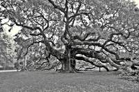 Angel oak_2005