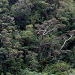 """Milford Sound Tree Canopy"" by javaman"