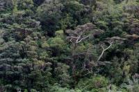 Milford Sound Tree Canopy