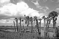 Florida Wetlands B&W