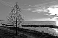 Lake Apopka Sunset B&W
