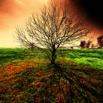 """""""The Tree"""" by crowt59"""