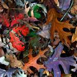"""""""Fall Colors"""" by JoanneCoyle"""