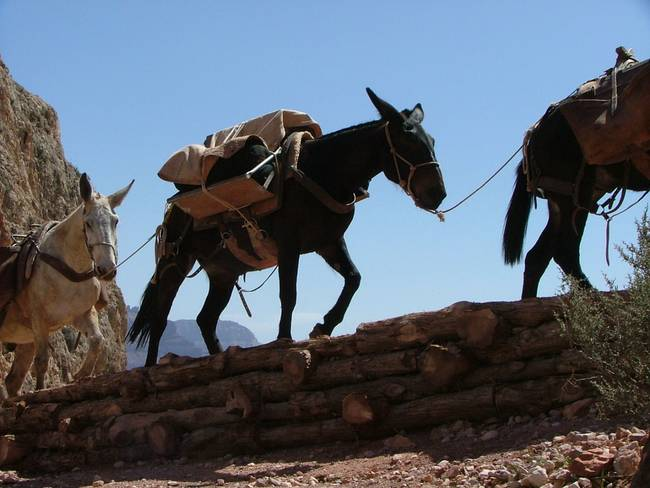 """Stunning """"Pack Mule"""" Photography For Sale On Fine Art Prints"""