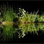 """""""REFLECTION - II"""" by DreamerByHeart"""
