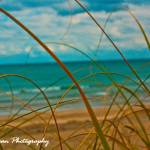 """Colours of Summer (Winter in Florida)"" by mgphotographyfl"