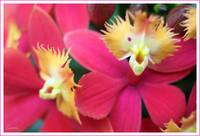 Pink Tuesday tiny Orchids!