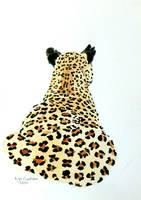 Leopard Backview
