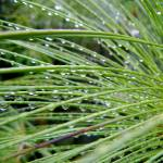 """""""Papyrus After the Rain"""" by SimonGlickman"""