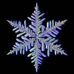 """f1219a125Ablk"" by SnowCrystals"