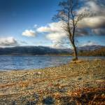 """""""Ben Lomond and Tree"""" by SongofStone"""