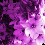 """purple harmony"" by artbyaleksandra"