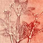 """""""Floral"""" by kalbert"""