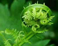 Unfurling Green