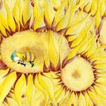 """Honeybee asleep in sunflower"" by ideasillustration"