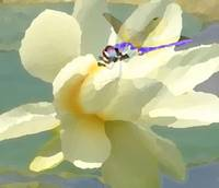 Dragonfly and Water Lily