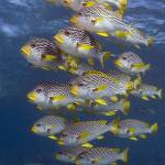"""Sweetlips 082607MD057"" by Michelehall"