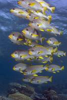 Sweetlips 082607MD057