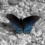 """""""Butterfly"""" by emolee84"""