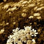 """""""Flower (Beirut, Lebanon)"""" by ricceriart"""