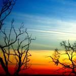 """Bare Trees"" by SimonGlickman"